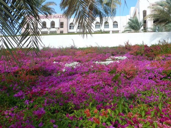 Crowne Plaza Sohar: beautiful flower garden