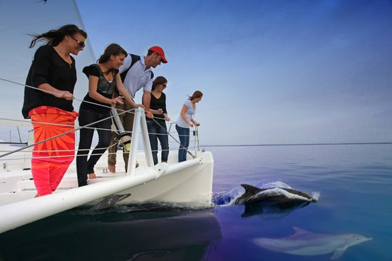 Dolphin Watch Cruises: Sailing with Dolphins