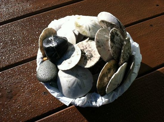 Westport Bayside Bed & Breakfast: Sand dollars and rocks that our children collected from the beach.
