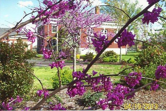 Springtime at Missouri Civil War Museum. Picture of Saint Louis ...