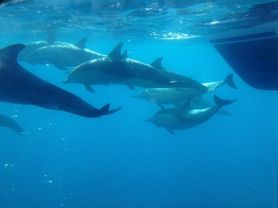 Capt. Dave's Dolphin & Whale Watching Safari: Almost like you're part of the pod