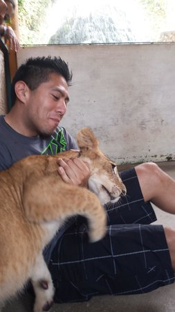 Zoologico de Vallarta: Jag cub