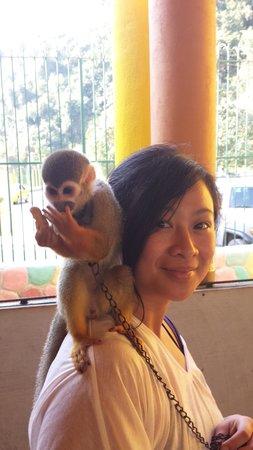 Zoologico de Vallarta: Monkey