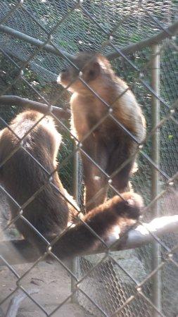 Zoologico de Vallarta: tiger cub