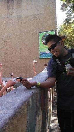 Zoologico de Vallarta: Flamingo feeding