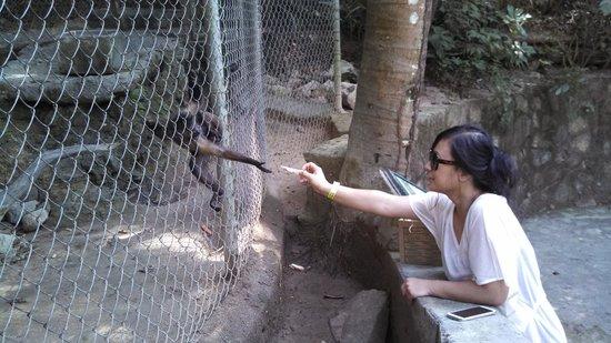 Zoologico de Vallarta: Feeding the monkey