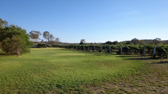 Farmer's Daughter Cottages: A view over the vineyard