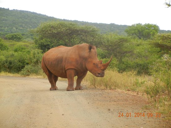 Mvubu River Lodge: On our way out we encountered this friendly guy.