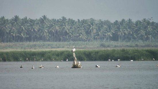 Kanva Dam: Birds in Kanva