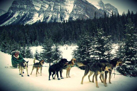 Kingmik Dog Sled Tours: Our sled