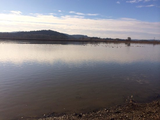 Forest Grove, Oregon: Wetlands lake