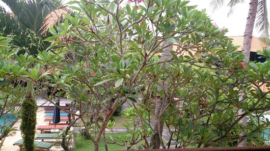 Hotel Puri Rai: Garden view from the balcony