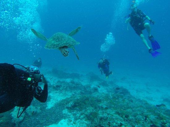 Azanzi Beach Hotel : Diving off Mnemba Island