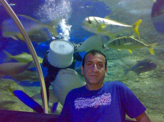 Underwater World Pattaya city,Thailand - Picture of Underwater World ...