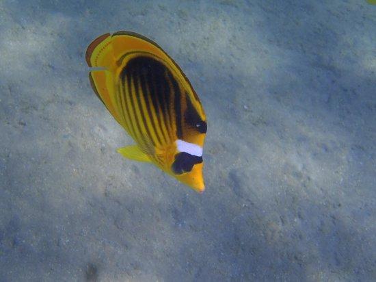 Jaz Sharks Bay: Fisch ;)