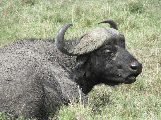 Julius Tact Safaris - Private Day Trips: Masai Mara