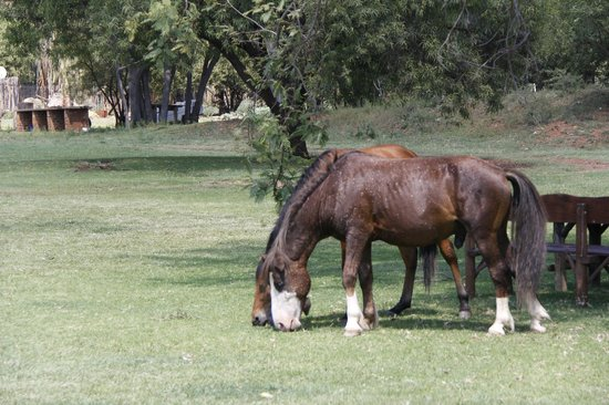 Thandile Country Lodge: Horses abound