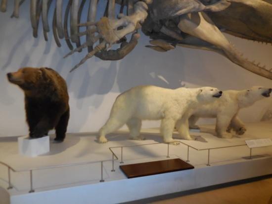 Meget Børnevenlig Anmeldelse Af Zoologisk Museum København