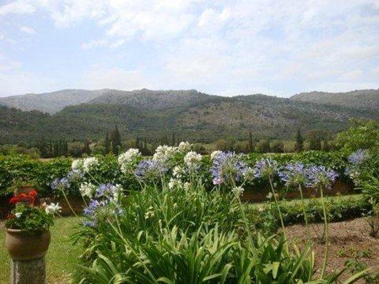 Agroturismo Vall de Pollenca: agroturismo