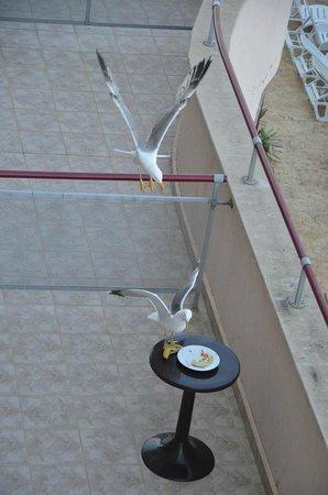 DoubleTree by Hilton Varna - Golden Sands: вид на соседний балкон