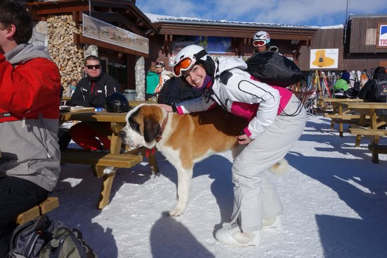 Chalet Le Bullou : St Bernards pooch found at top of Funiculaire en route to Grand Motte