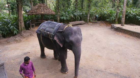 Sterling Thekkady : Elephant Safari