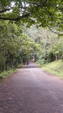 Sterling Thekkady : On the way to Periar Wildlife sanctuary