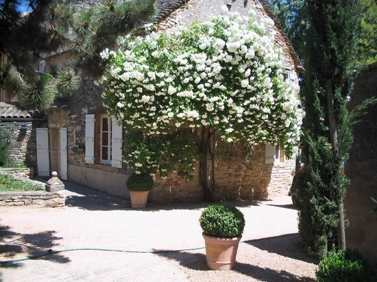 Le Clos de Clesse: blossom of the roses