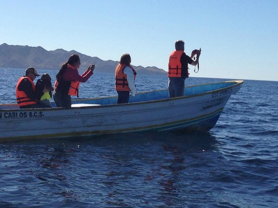 Hotel Villas Mar y Arena Ecotours : Tour boats, whale watching.