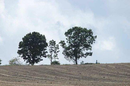 Parent Child Tree: 遠くから見た所