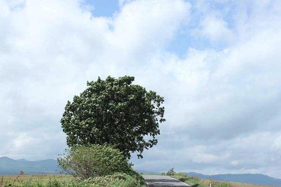 Parent Child Tree: 農道から