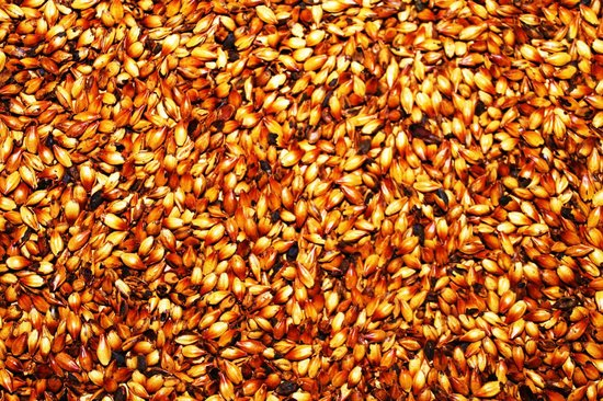 Super Cool Beer Tour: Variety of malted barley