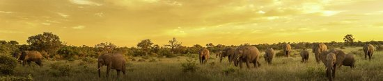 Timbavati Private Nature Reserve, Sudáfrica: Game Drives