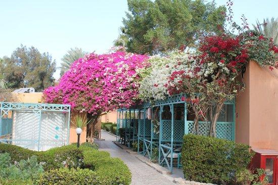 Giftun Azur Resort : Blomstrende træer og buske over alt