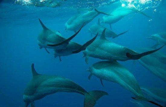 Tamarin Bay : Au milieu des dauphins