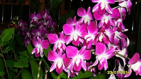 PS Hill Resort: цветут орхидеи.. очень красиво...