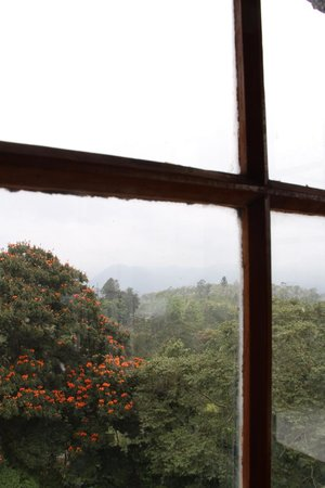 Ceylon Tea Museum: View from the museum