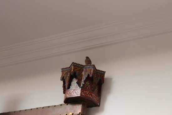 Riad le Clos des Arts : A bird flew in, perched on top of the door hinge and flew away after singing us one song.