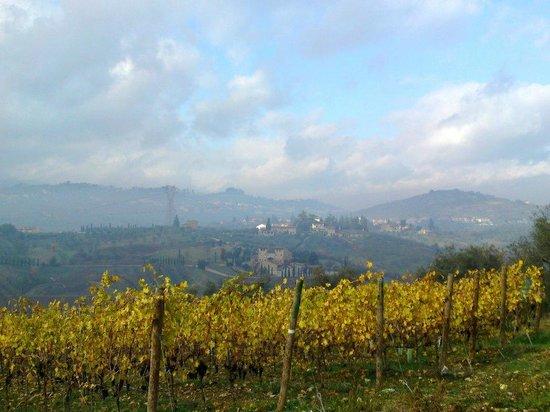 Agriturismo Tenuta Cantagallo: Vista panoramica- Panoramic View