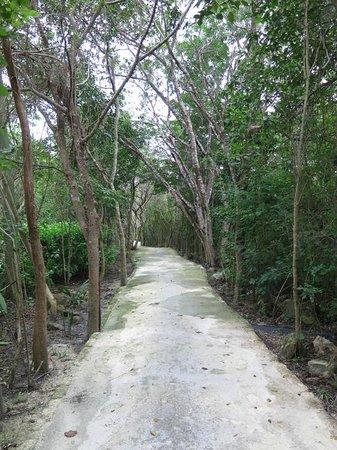 Rosewood Mayakobá: Trail