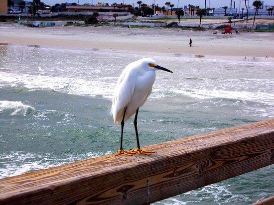 Ocean East Resort Club : More wild life