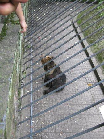Chongqing Zoo (Chongqing Dongwuyuan): This is the bear begging snacks from visitors..