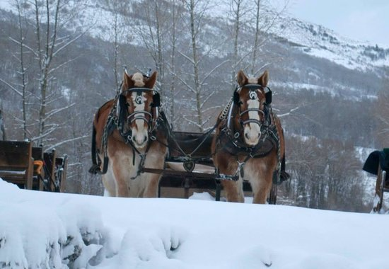 Rocky Mountain Recreation of Utah: Sleigh horses.