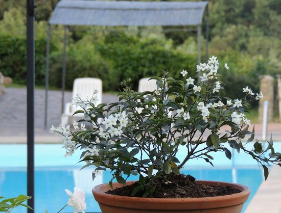 Capraia e Limite, Italië: Piscina- Pool