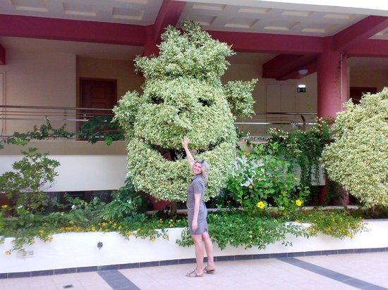 Hydramis Palace Beach Resort: кустик фикуса