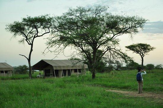 Kati Kati Tented Camp: Kati Kati Camp, Serengeti.