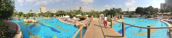 Grand Hyatt Dubai: Pool area