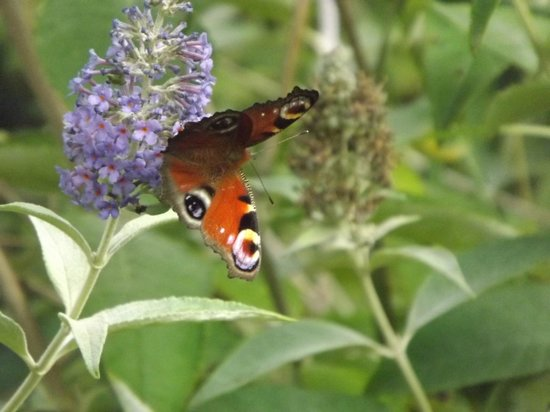 Tropical Butterfly House, Wildlife & Falconry Centre: Butterfly House resident