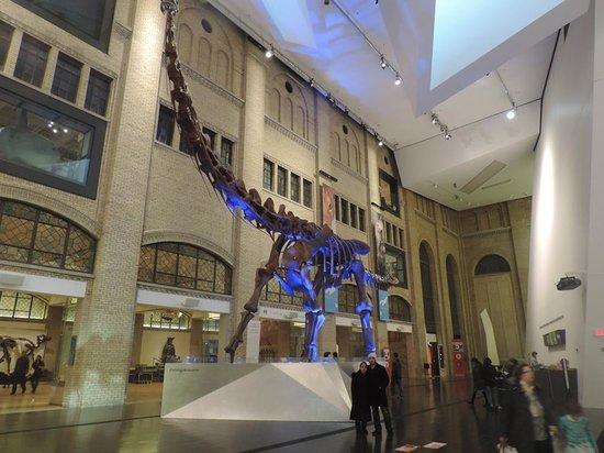 Royal Ontario Museum (ROM): Entrada del Museo