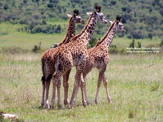 La Mara (rivière) : Wonderful landscapes and AMAZING wildlife